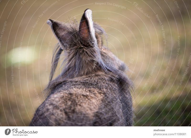 """"""" bockig """" Ostern Natur Erde Frühling Schönes Wetter Gras Wiese Tier Haustier Fell Hasenohren Zwergkaninchen Nagetiere Säugetier Hase & Kaninchen 1 Hasenlöffel"""