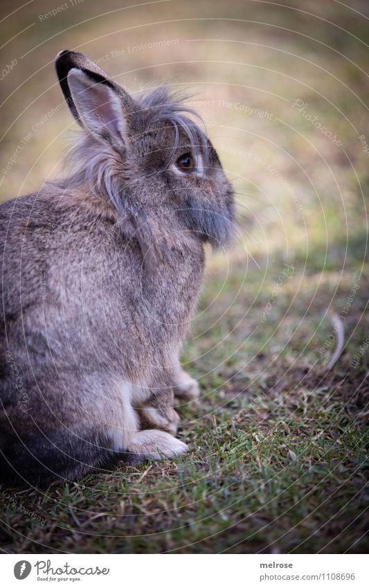 Vorösterliche Entspannung Natur grün Erholung Tier Wiese Frühling Gras Denken braun Zufriedenheit warten niedlich Schönes Wetter Ostern Gelassenheit Fell