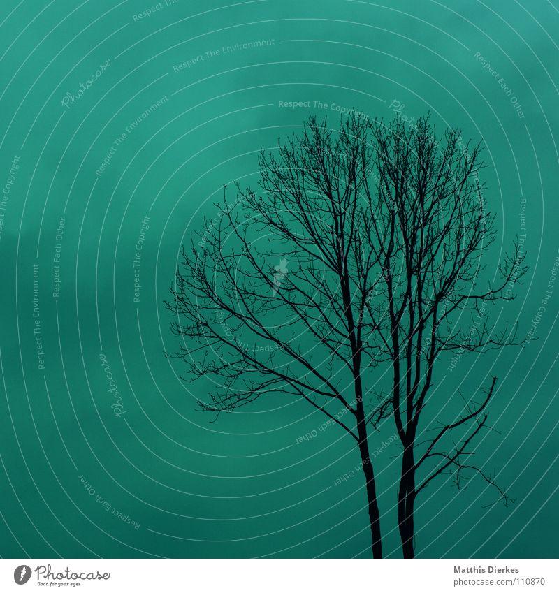 nebel Herbst Baum laublos Wolken Endzeitstimmung verweht vergangen Vergänglichkeit Beerdigung Trauer Tragödie Wetterumschwung Herbstwetter Regen Panik stimmig