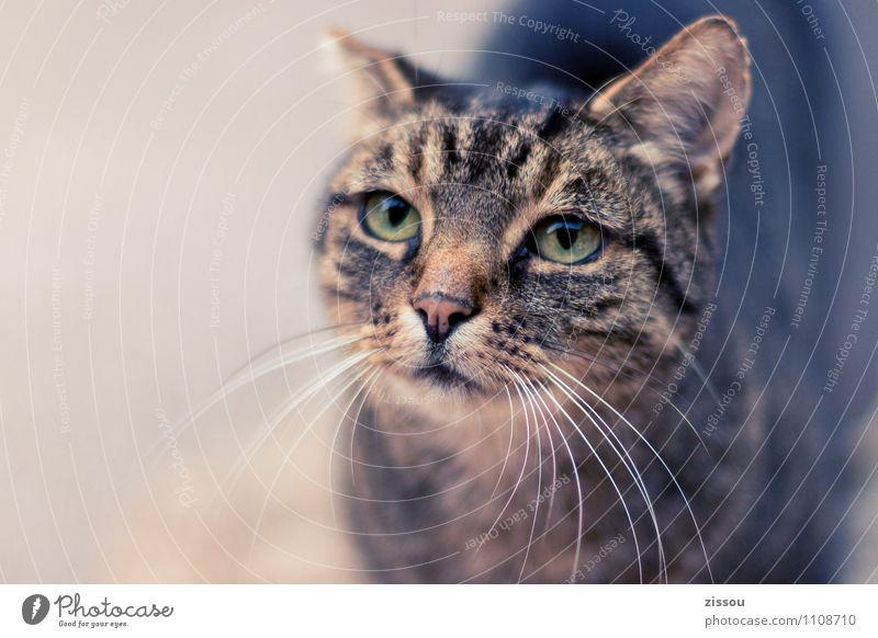 Lilly Haustier Katze Tiergesicht 1 Blick schön kuschlig unten braun Neugier Interesse Sinnesorgane Farbfoto Außenaufnahme Menschenleer Textfreiraum links