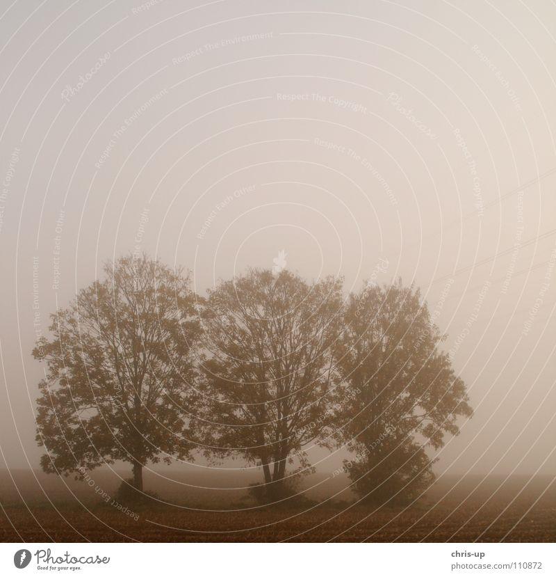 Bäume im Nebel 2 Feld Landwirtschaft Fußweg Landstraße Gemüsebau braun grün Ackerbau Baum Baumreihe dunkel grau Aussicht Durchblick Morgennebel Tau Winter