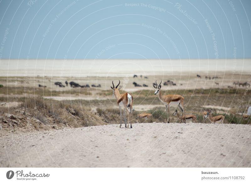 mittendrin. Natur Ferien & Urlaub & Reisen Landschaft Tier Ferne Wärme Straße Wege & Pfade Freiheit Tourismus Wildtier Ausflug beobachten Tiergruppe