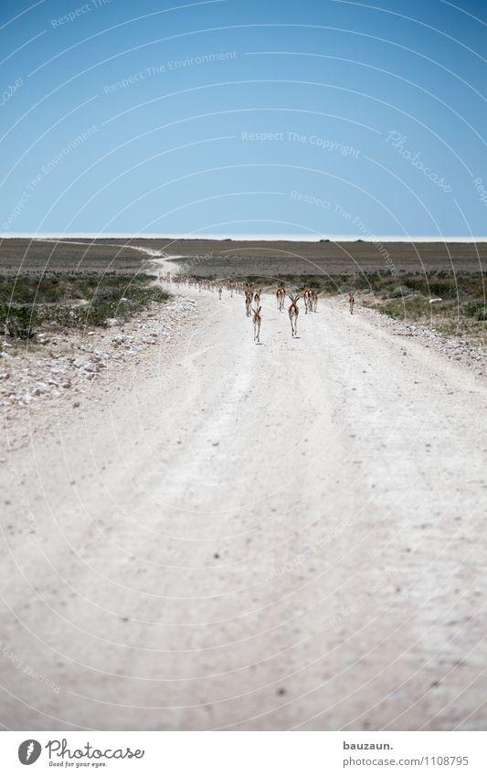 ist denn heute wandertag. Ferien & Urlaub & Reisen Tourismus Ausflug Abenteuer Ferne Freiheit Sightseeing Safari Expedition Umwelt Natur Landschaft Erde Sand