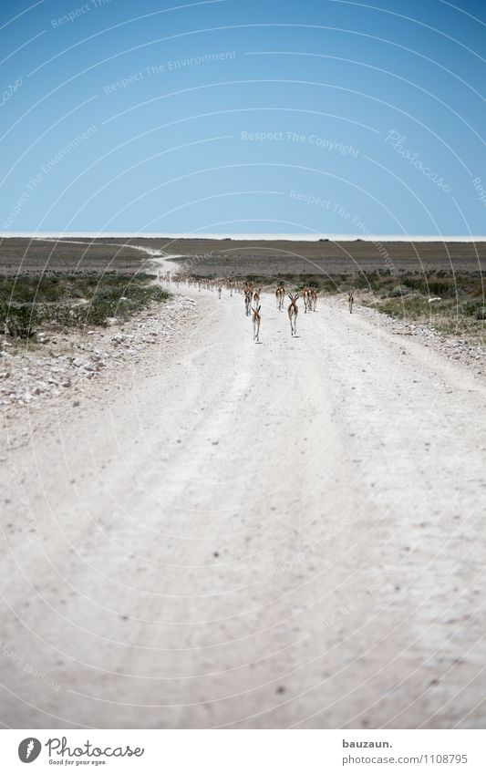 ist denn heute wandertag. Natur Ferien & Urlaub & Reisen schön Landschaft Tier Ferne Umwelt Straße Bewegung Wege & Pfade Freiheit Sand Erde Tourismus Wildtier