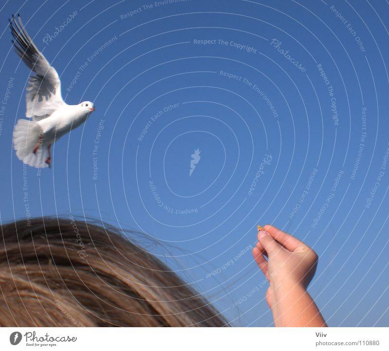 Fertiggericht Mensch Himmel blau weiß Hand Tier Haare & Frisuren Kopf Vogel Wasserfahrzeug blond Ernährung Finger Schönes Wetter Möwe Sportveranstaltung