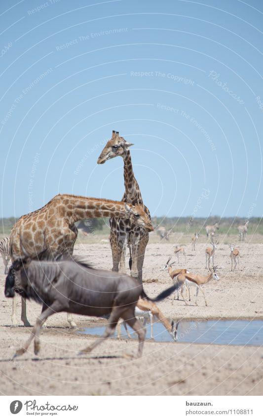 ich bin dann mal weg. Natur Ferien & Urlaub & Reisen Wasser Sommer Tier Umwelt Wärme Wetter Erde Tourismus Wildtier laufen Klima Ausflug beobachten Tiergruppe