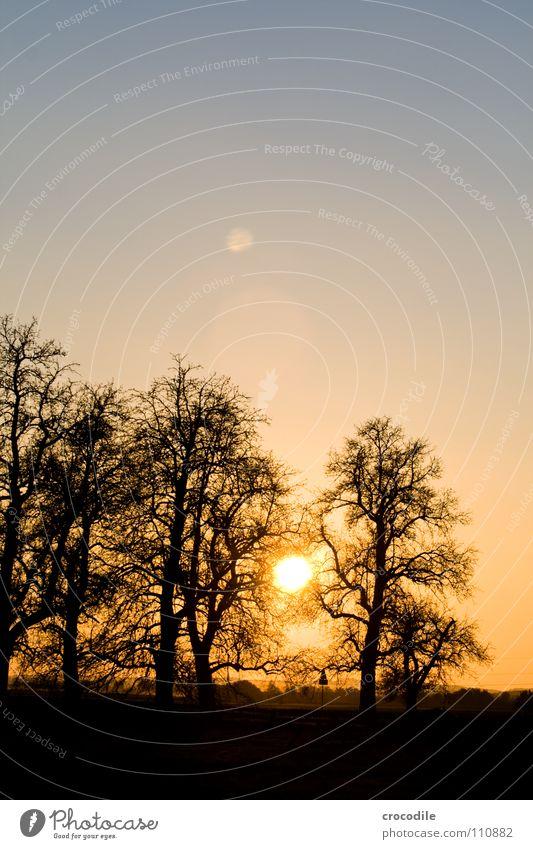 baumsiluetten im sonnenuntergang Himmel Baum Sonne blau schwarz Herbst Abenddämmerung