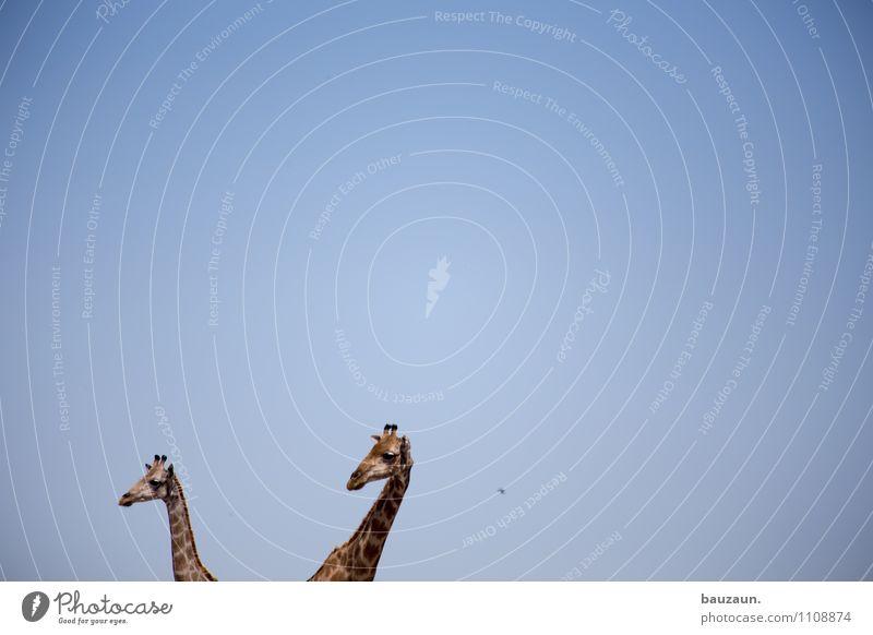 hääää. Himmel Natur Ferien & Urlaub & Reisen schön Tier Ferne Wärme Freiheit Tourismus Wildtier Tierpaar Ausflug beobachten Schönes Wetter Abenteuer entdecken