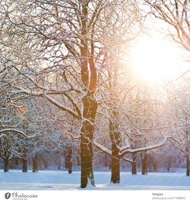Winterwald Wald Schneelandschaft Winterlicht Winterurlaub Dämmerung schnee Dezember Stimmung Sonne Sonnenstrahlen Baum Januar November Februar Landschaft