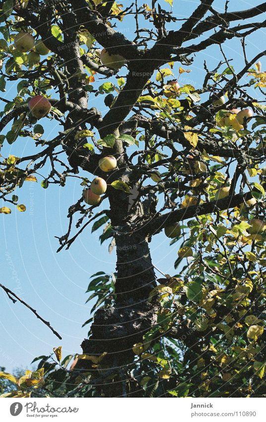 Gesundes aus Fulda Himmel Baum blau Sommer gelb Gesundheit Frucht Ast Apfel Zweig Landkreis Fulda