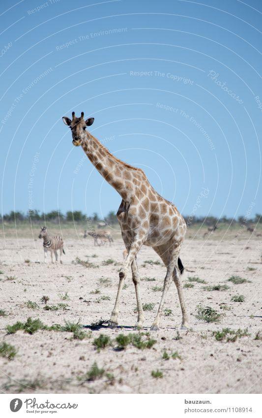 dann bin ich auch mal weg. Natur Ferien & Urlaub & Reisen Sommer Landschaft Tier gehen Sand Erde Tourismus Wildtier Ausflug beobachten Schönes Wetter Abenteuer