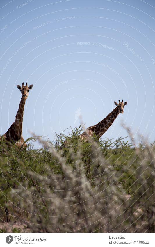 los duck dich. Natur Ferien & Urlaub & Reisen schön Sommer Landschaft Tier Umwelt Wärme natürlich Tourismus Wildtier Tierpaar stehen Sträucher hoch groß