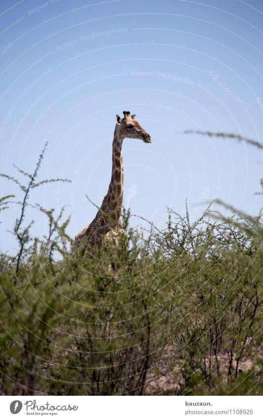 ich versteck mich. Natur Ferien & Urlaub & Reisen schön Sommer Landschaft Tier Umwelt Wärme natürlich Tourismus Wildtier Sträucher hoch Ausflug beobachten