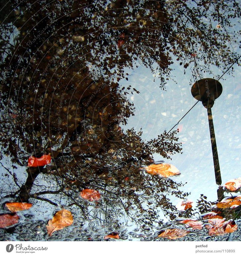 Herbstpfütze I Baum Winter Straßenbeleuchtung Blatt braun grau schwarz Wolken weiß Jahreszeiten Wasser Regen Wetter orange Zweig Ast Himmel blau