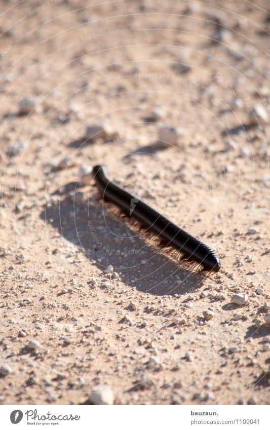 nimm die beine in die hand. Ferien & Urlaub & Reisen Ausflug Abenteuer Sightseeing Safari Expedition Umwelt Natur Landschaft Erde Sand Sonne Etoscha-Pfanne