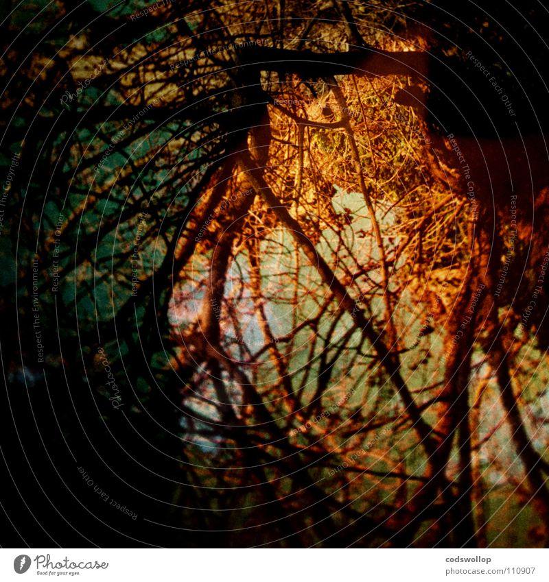 Brocéliande Baumwurzel Zauberwald mystisch Mysterium Düsterwald dunkel fantastisch chaotisch netzartig Netzwerk