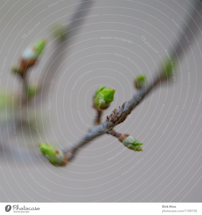 Frühling IV Landschaft Pflanze Baum Sträucher Garten Park Wald braun grau grün Beginn Neuanfang zart zartes Grün Fortschritt neu Ast Erneuerung Wachstum