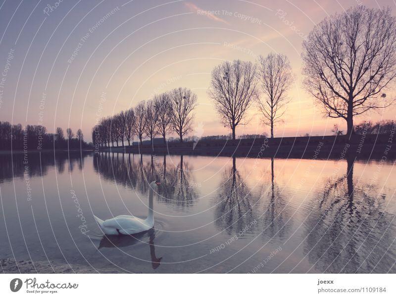 Anbetung Landschaft Wasser Himmel Winter Schönes Wetter Seeufer Wildtier Vogel Schwan 1 Tier schön orange schwarz Idylle ruhig Farbfoto Gedeckte Farben