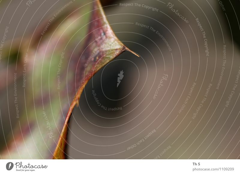 Blatt Natur Pflanze Herbst Winter Blühend verblüht ästhetisch authentisch einfach elegant natürlich Gelassenheit geduldig ruhig Bewegung Farbe einzigartig schön