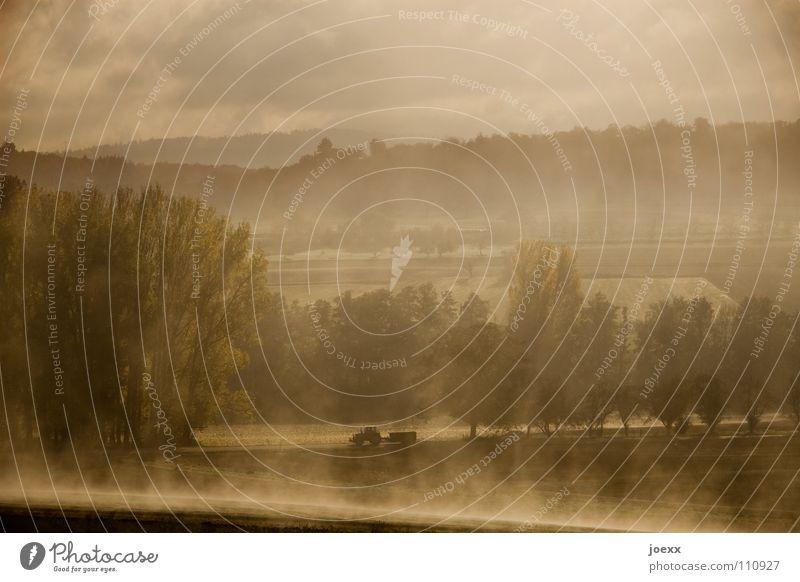 Resi wartet schon ... Landwirtschaft Baum Baumreihe Bodennebel fahren Morgen Tau Herbst Idylle Landschaft Nebel unklar poetisch Romantik ruhig Schleier