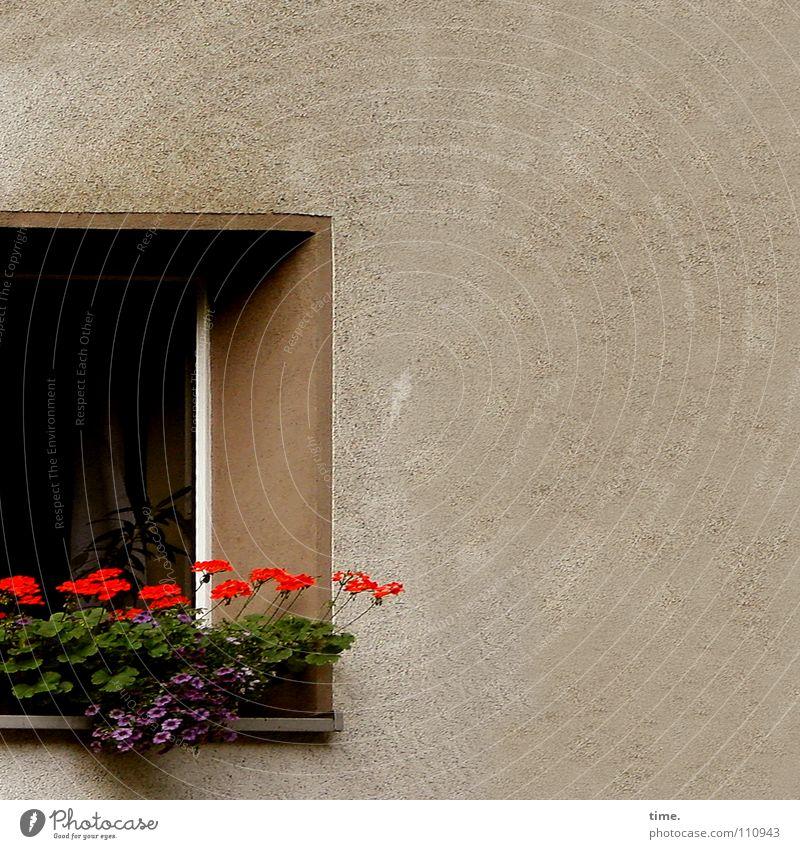 Vorzimmerdamen Farbfoto Gedeckte Farben Außenaufnahme schön Dekoration & Verzierung Raum Blume Mauer Wand Fenster stehen grün rot Romantik Langeweile Idylle