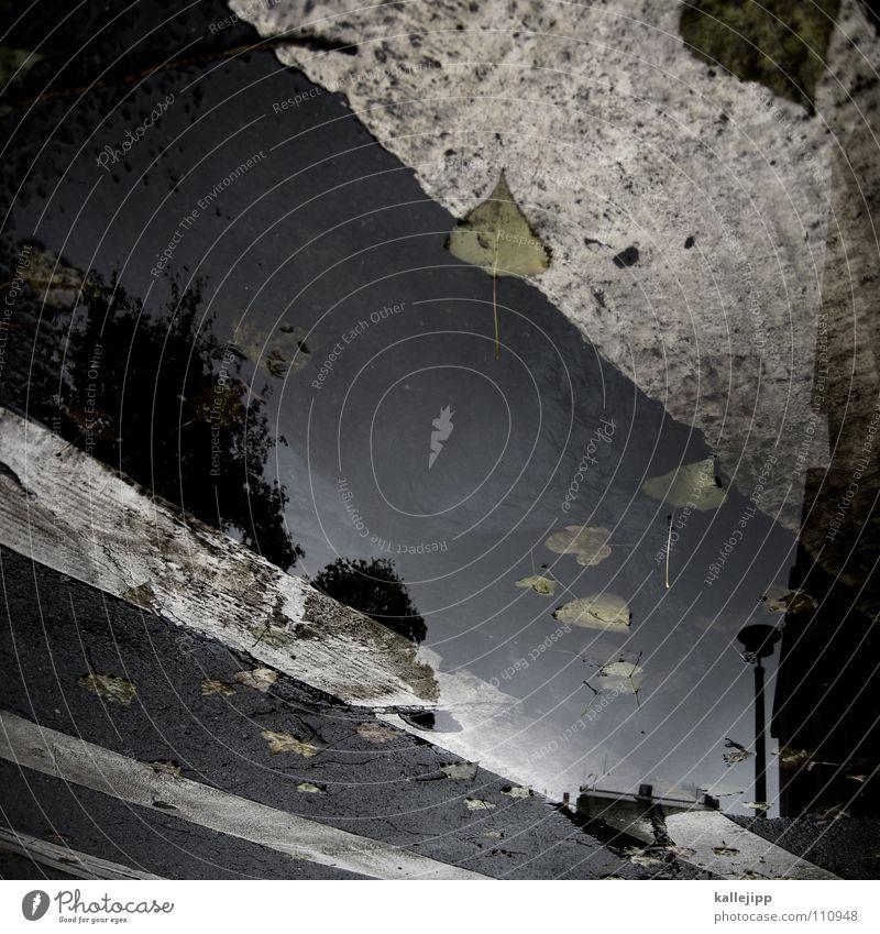 dark sky Pfütze Herbst Reflexion & Spiegelung Haus Wohnung Mieter Vermieter Blatt Baum laublos nass feucht grau schlechtes Wetter Tiefdruckgebiet tief Sturm