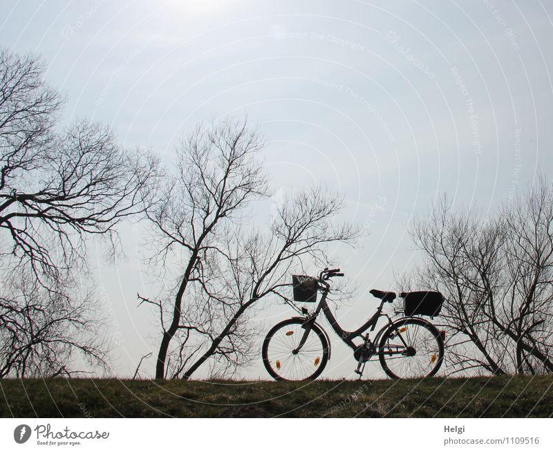 auf gehts... Himmel Natur blau Pflanze Baum Einsamkeit Landschaft ruhig Freude schwarz Umwelt Leben Frühling Wege & Pfade grau Freizeit & Hobby