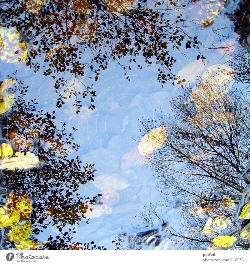 Herbstpfützenbaumkronen I Winter Blatt Reflexion & Spiegelung unten Baum Baumkrone Pfütze Wind Wetter Regen Reflektion Reflection Ast Himmel oben Natur