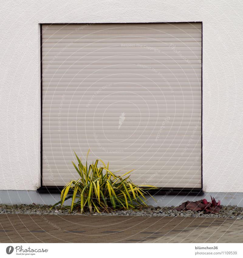 spießig | war mein erster Eindruck Grünpflanze Stadt Haus Gebäude Mauer Wand Fassade Schaufenster Rollladen Sichtschutz Jalousie Parkplatz Ordnungsliebe Spießer