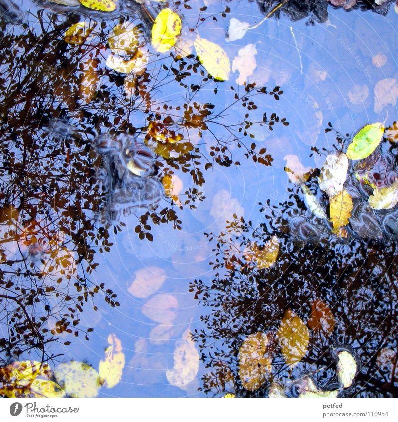 Herbstpfützenbaumkronen II Winter Blatt Reflexion & Spiegelung unten Baum Baumkrone Pfütze Wind Wetter Regen Reflektion Reflection Ast Himmel oben Natur
