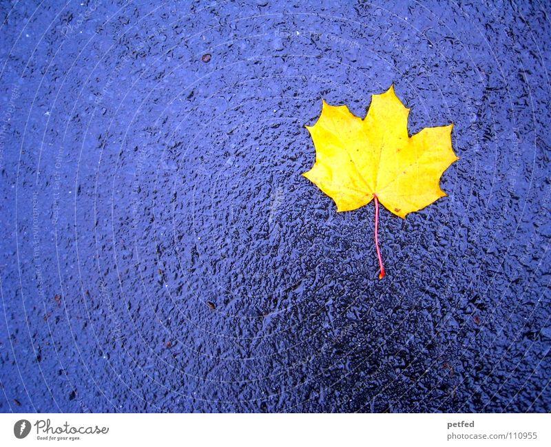 Einsam und allein blau Blatt gelb Straße Leben Herbst grau Regen Wind Wetter nass fallen Jahreszeiten Ahorn