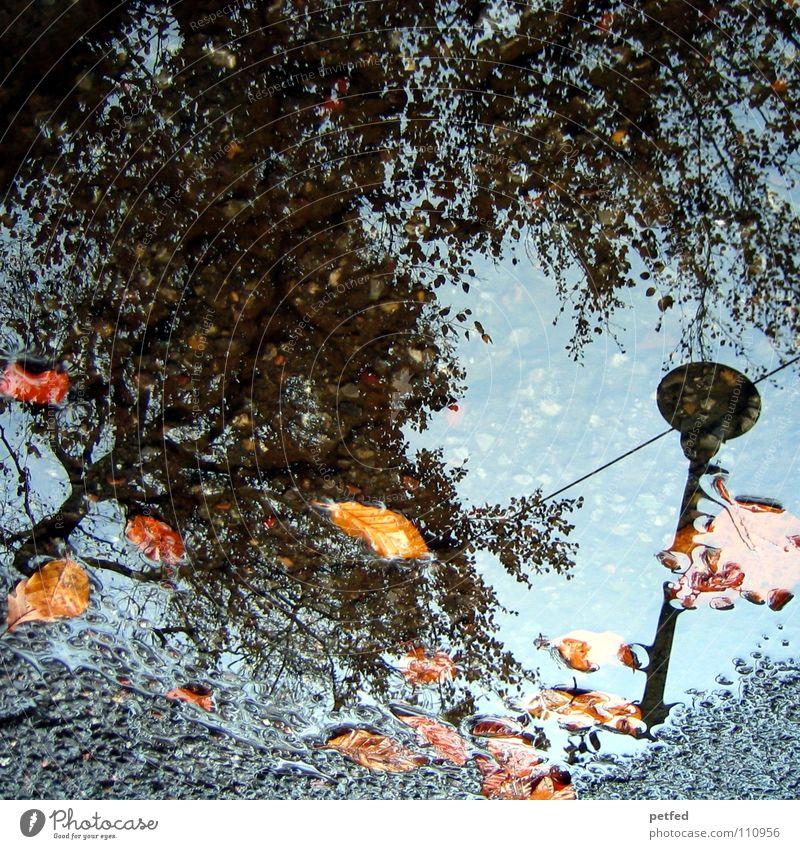 Herbstpfütze II Baum Winter Straßenbeleuchtung Blatt braun grau schwarz Wolken weiß Jahreszeiten Wasser Regen Wetter orange Zweig Ast Himmel blau