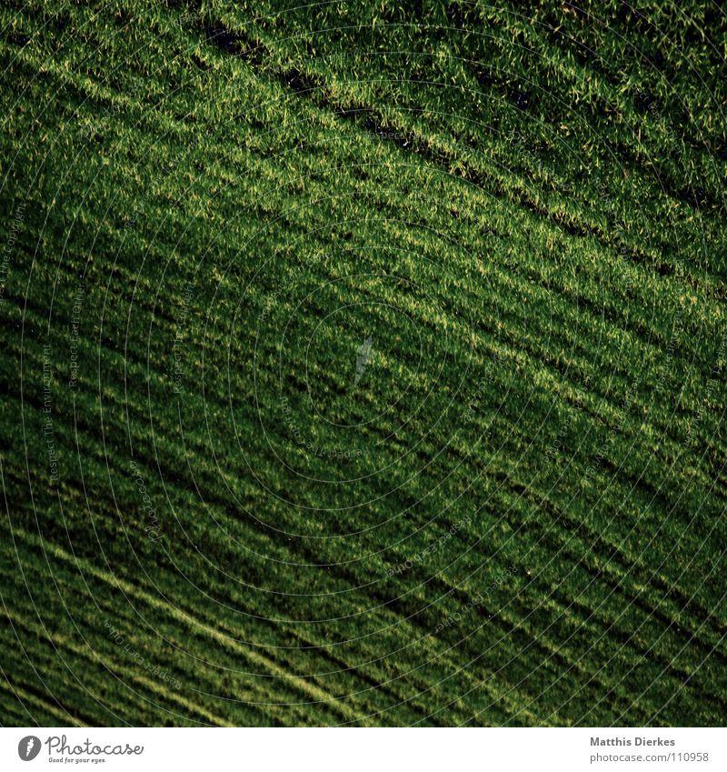 acker Feld Wiese Herbst Sommer Landwirtschaft Arbeit & Erwerbstätigkeit Horizont trist Trauer Botanik Jungpflanze Nebel Herbstwetter Regen Ordnung verzweigt