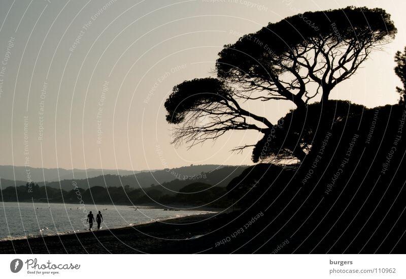 Pinienhainabend Meer Strand Korsika Baum Spaziergang Hügel Wellen ruhig Abenddämmerung Herbst harmonisch Frankreich Küste Sand Bucht Mittelmeer Palombaggia