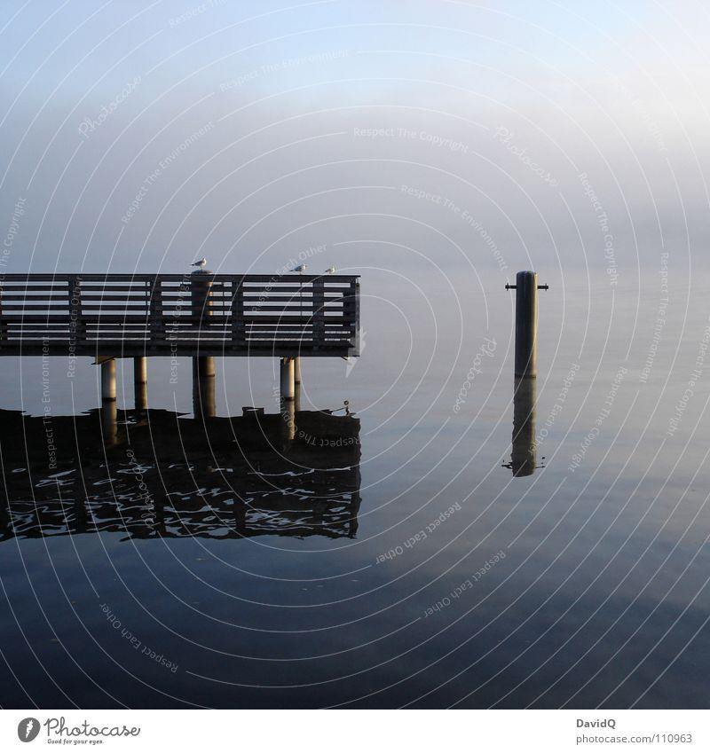 Ruhe Wasser ruhig kalt Erholung Herbst See Nebel Beginn Fluss entdecken Steg Anlegestelle Teich Bach Möwe November