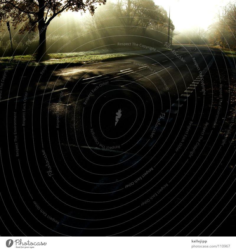 road to nowhere Baum Wald Straße Wege & Pfade Tod glänzend gold Zukunft Hoffnung Symbole & Metaphern Glaube Verkehrswege Strahlung Gott Aussehen Götter