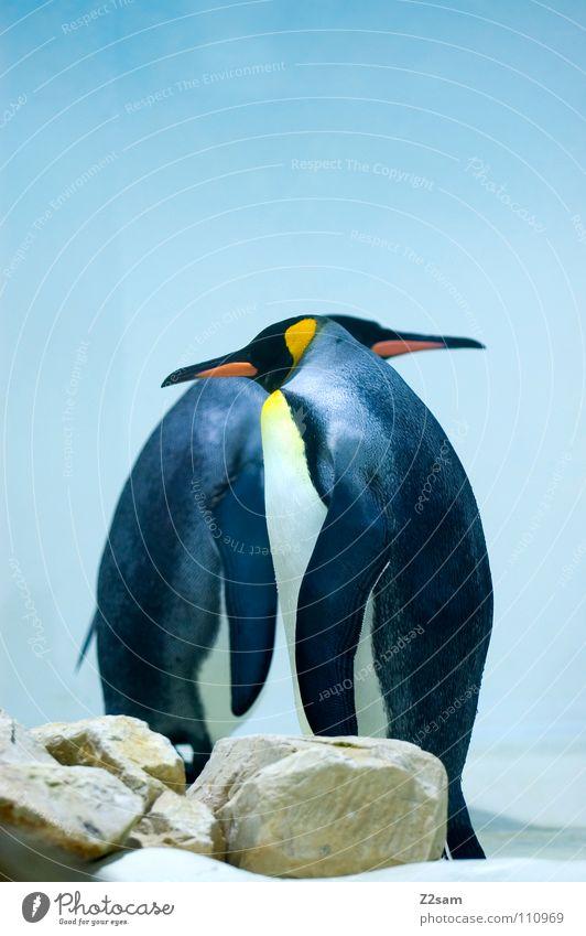 frackträger Himmel blau Tier kalt lustig Freundschaft Eis Vogel Zusammensein stehen außergewöhnlich Flügel Warmherzigkeit Vertrauen skurril Zusammenhalt