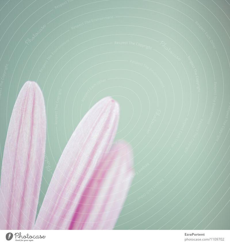 ein Blümchen dazu Himmel Natur blau Pflanze schön Sommer Blume Blatt Umwelt Gefühle Frühling Blüte natürlich Glück Garten Linie
