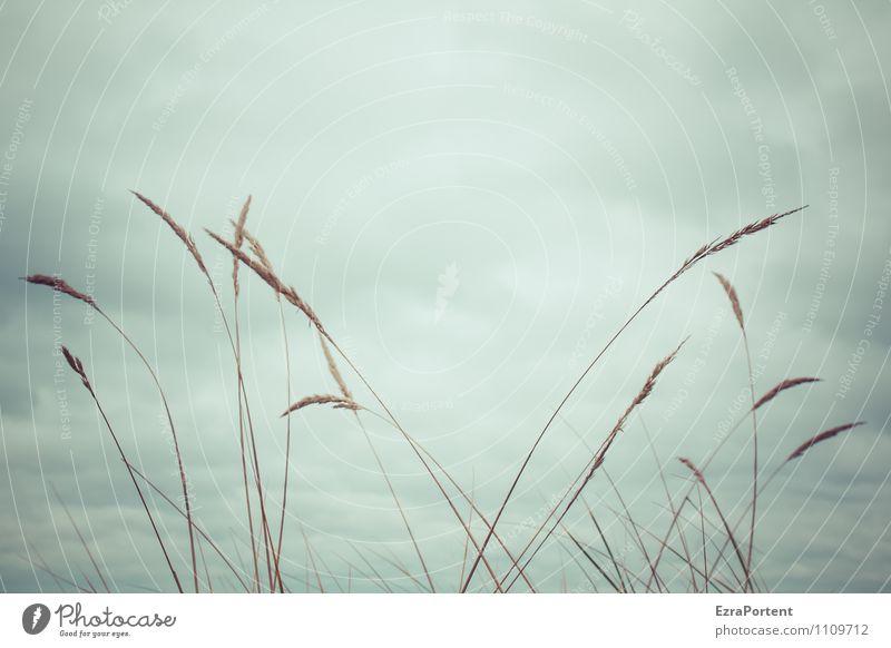 so leicht Umwelt Natur Landschaft Pflanze Luft Himmel Wolken Wetter Gras Wiese Feld ästhetisch natürlich grau Leichtigkeit Farbfoto Gedeckte Farben