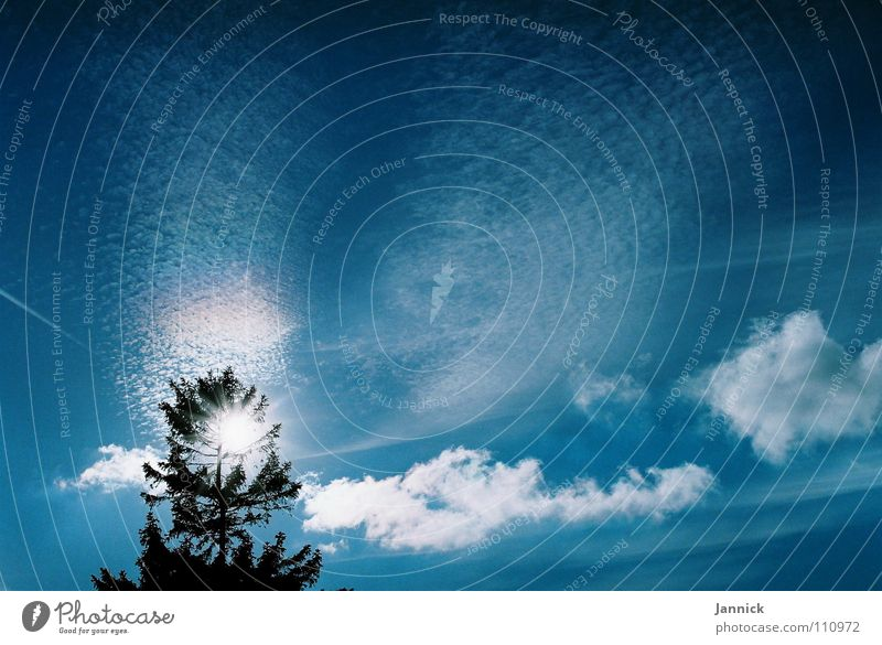 Meer aus Wolken Baum weiß Kondensstreifen Herbst Himmel blau Sonne Zweig Ast