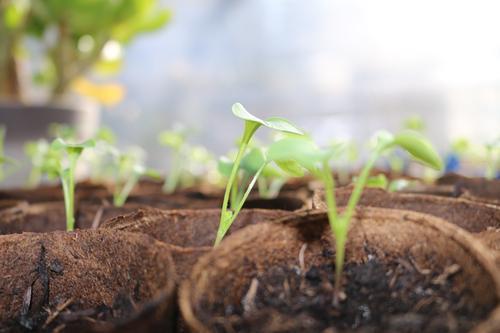 junge Pflanze Natur Blatt Tier Frühling Glück Zufriedenheit Erde Lebensfreude Urelemente Kräuter & Gewürze Gemüse Meditation Vorfreude Begeisterung Gartenarbeit