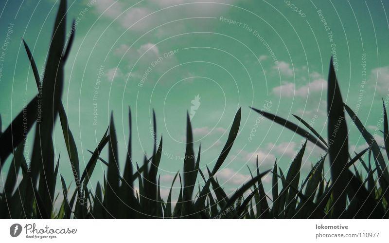 Insektenblick Wiese Wolken Gras grün Mikrofotografie Hoffnung Halm klein Ameise Himmel Heuschrecke Surrealismus frei Natur Bodenbelag Erde