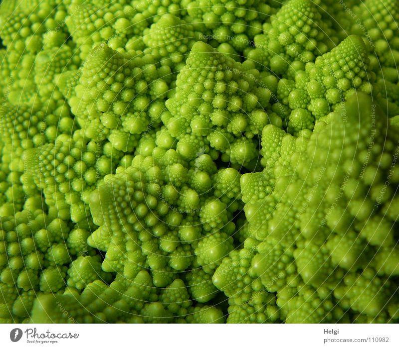 Detail eines Romanesco-Kohlkopfes Blumenkohl Brokkoli Ernährung Lebensmittel Vegetarische Ernährung Vegane Ernährung Pflanze Gesundheit Vitamin kochen & garen