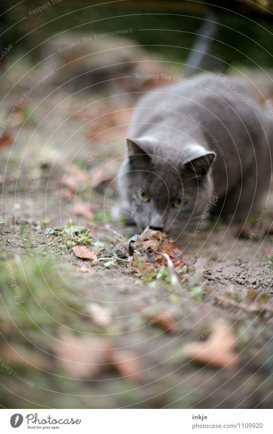 über Stock und Stein... Katze Natur Tier Leben Gefühle Tod Garten Park Angst Wildtier warten gefährlich beobachten Neugier festhalten Todesangst