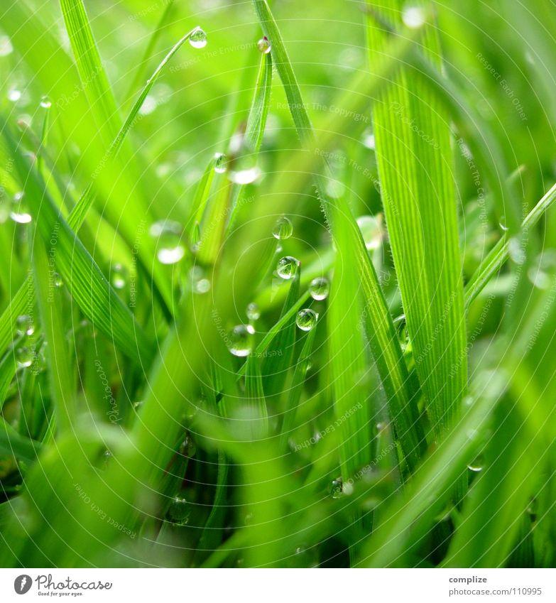 extra Wiese² Gras Tau Halm Park Nahaufnahme grün Sommer Frühling Klee nass feucht Alm rund eckig Pflanze Reifezeit Wachstum Kuh aufwachen springen Makroaufnahme