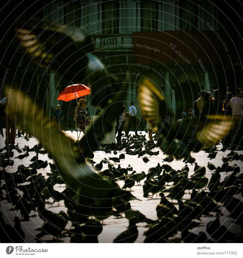 Taubenschlag Mensch weiß rot schwarz gelb Lampe Vogel fliegen dreckig Platz Beginn Luftverkehr stehen Feder Flügel Italien