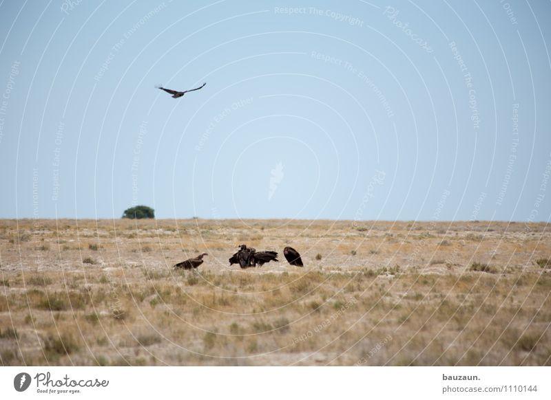 ihr aasgeier. Ferien & Urlaub & Reisen Tourismus Ausflug Abenteuer Ferne Freiheit Sightseeing Safari Expedition Umwelt Natur Landschaft Erde Wolkenloser Himmel