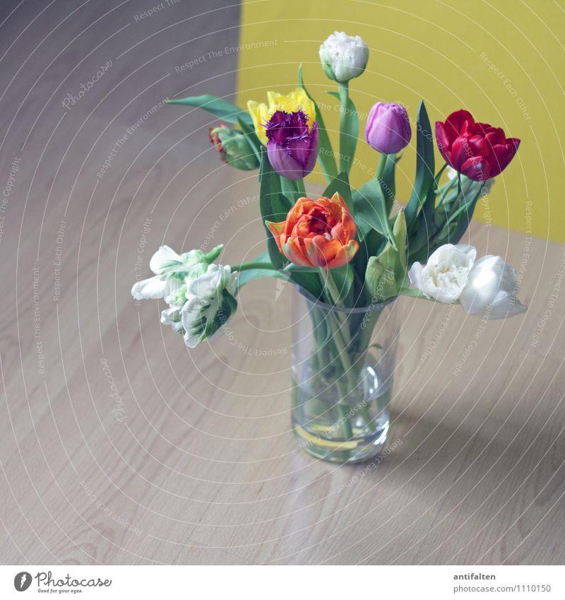 Ich mag Tulpen Blume Blatt Haus Wand Innenarchitektur Blüte Feste & Feiern Wohnung Raum Häusliches Leben Dekoration & Verzierung Geburtstag Fröhlichkeit