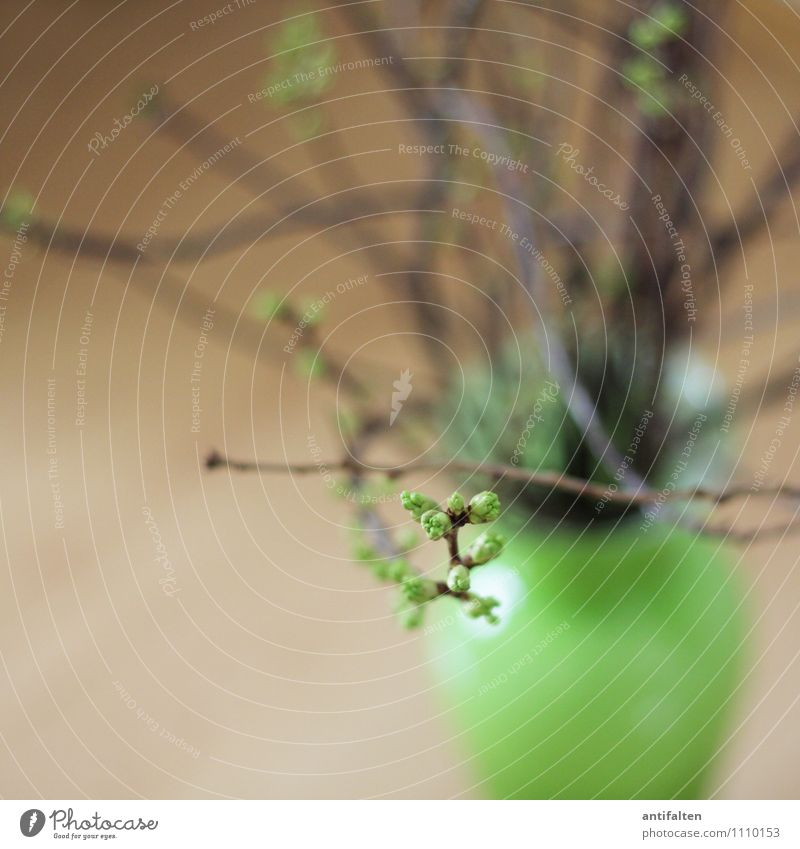 Kleine Knospe Pflanze grün Leben Innenarchitektur Frühling Blüte natürlich braun Wohnung Raum Häusliches Leben Dekoration & Verzierung Sträucher Beginn