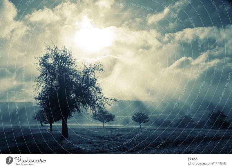 Kraft Baum Baumreihe Bodennebel Erholung Herbst Idylle Licht Morgen Denken Nebel Nebelwand unklar poetisch Romantik ruhig Sonnenenergie Sonnenlicht